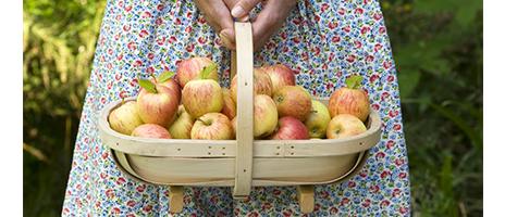 Fruit pressing and crushing